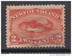 1887   YVERT  41 - Newfoundland