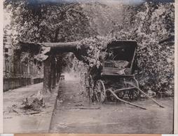 WASHINGTON USA TREE FALLS INTO WAGON   Fonds Victor FORBIN (1864-1947) - Lugares