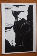 Falcon And Snake - Old Postcard  Falco /  FAUCON -  1960 - Oiseaux