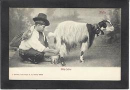 CPA Chèvre Caprin Goat Non Circulé Malte Malta - Animals