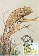 """ CAMELEON "" Sur Carte Maximum Du PORTUGAL De 1991. CM - Reptiles & Batraciens"