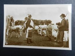 19924) Debrecen Baromvasar Debreciner Viehmarkt Rinder Hungary LOCALITA' DA IDENTIFICARE NON VIAGGIATA - Ungheria