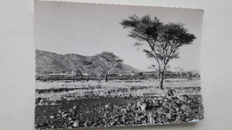 Niger Les Bagzans Très Rare - Namibia