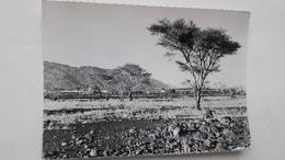 Niger Les Bagzans Très Rare - Namibie
