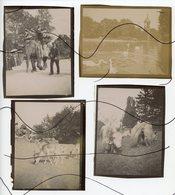 4 PHOTOS IDENTIFIÉES. Neuilly-sur-Seine. Jardin D'Acclimatation . Elephants, Gazelles, Cygnes, Buffles. Année 1902 - Lieux