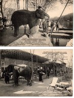 Olivet : Café-restaurant Grenier (éléphant) 2 Cpa - Autres Communes