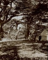 Lebanon,  Lebanese Republic,  Western Asia  CAMPING  Fonds Victor FORBIN (1864-1947) - Lugares