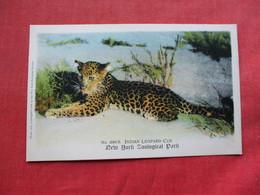 Indian  Leopard  Cub   NY Zoo Ref 3294 - Tierwelt & Fauna
