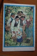"OLD USSR Postcard  - ""Do Not Cry , Amanita!"" By Chernyavsky -   Champignon  - Mushroom - 1979 - Funghi"