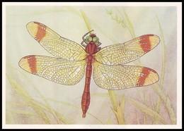 DRAGONFLY - Sympetrum Pedemontanum Allioni. Artist L. Aristov. Unused Postcard (USSR, 1987) - Insecten