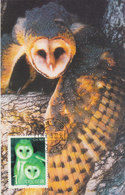 CHINA 1995 MAX CARD Barn Owl.BARGAIN.!! - Hiboux & Chouettes