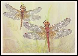 DRAGONFLY - Sympetrum Flaveolum L. Artist L. Aristov. Unused Postcard (USSR, 1987) - Insecten