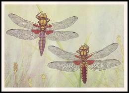 DRAGONFLY - Libellula Depressa L. Artist L. Aristov. Unused Postcard (USSR, 1987) - Insecten
