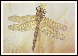 DRAGONFLY - Somatochlora Metallica Lind. Artist L. Aristov. Unused Postcard (USSR, 1987) - Insecten