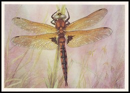 DRAGONFLY - Epitheca Bimaculata Charp. Artist L. Aristov. Unused Postcard (USSR, 1987) - Insecten