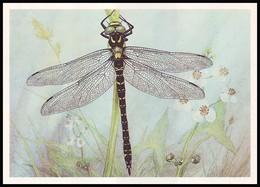 DRAGONFLY - Cordulegaster Annulatus Latr. Artist L. Aristov. Unused Postcard (USSR, 1987) - Insecten
