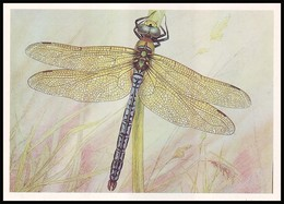 DRAGONFLY - Anax Imperator Leach. Artist L. Aristov. Unused Postcard (USSR, 1987) - Insecten