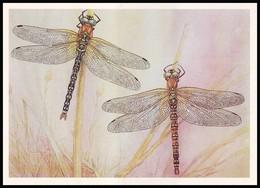 DRAGONFLY - Aeschna Cyanea Müll. Artist L. Aristov. Unused Postcard (USSR, 1987) - Insecten
