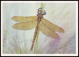 DRAGONFLY - Aeschna Grandis L. Artist L. Aristov. Unused Postcard (USSR, 1987) - Insecten