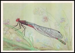 DRAGONFLY - Pyrrhosoma Nymphula Sulz. Artist L. Aristov. Unused Postcard (USSR, 1987) - Insecten