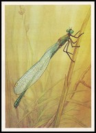 DRAGONFLY - Chalcolestes Viridis Lind. Artist L. Aristov. Unused Postcard (USSR, 1987) - Insecten