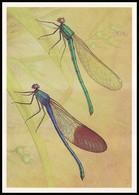 DRAGONFLY - Calopteryx Mingrelica Selys. Artist L. Aristov. Unused Postcard (USSR, 1987) - Insecten