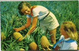 LUSCIOUS PINAPPLES. HAWAII. POSTALE CIRCULE 1969. ANANAS PIÑAS - LILHU - Estados Unidos