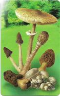 San Marino - Funghi Mushroom 1, 05.2002, 2€, 9.000ex, Mint - San Marino