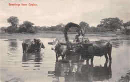 Sri Lanka (Ceylon) - Greetings From Ceylon - Sri Lanka (Ceylon)