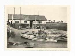 Photographie 17 - Récolte Des Huitres Havre De Brouage  1955 Photo 6,6x9,8 Cm Env - Lieux