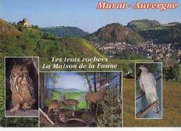 15 MURAT Les 3 Rochers La Maison De La Faune,Hibou Grand Duc Grand Cerf Et Chevreuils Autour Des Palombes - Murat