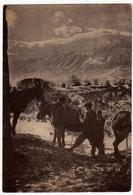 MILITARI - BTG. ALPINI INTRA - FRONTE GRECO ALBANESE - SCHEMBERDEJ - LA SPESA VIVERI -Vedi Retro - Guerre 1939-45