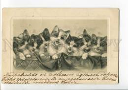 3004120 Charming KITTENS In Basket 1903 Year RPPC To Kronstadt - Gatti