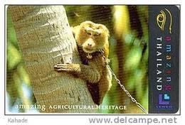 Thailand Phonecard Monkey 500 Baht  Lenso Nr. 048 - Thaïland