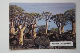 AFRICA-NAMIBIA: QUIVER TREE FOREST. SOUTHERN NAMIBIA - Old Postcard - Uganda Stamp - Namibia