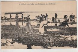 ROYAN 17 : Péche Aux Huitres à Marée Basse - Royan