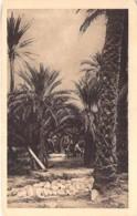 ALGERIE Algeria - BISKRA : Oasis De DRAUH - CPA - Algerien Algerije Argelia - Biskra