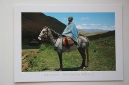 Basotho Horse - Lesotho - Lesotho