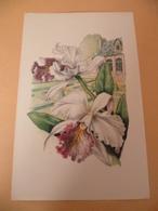 Image Orchidée Avec Pensée - Autres