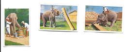 BP76 - IMAGES CIGARETTES SALEM - TRAVAIL DES ELEPHANTS - Cigarette Cards