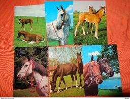 89 Kaarten Met PAARDEN - HORSES - CHEVAUX (zie Foto's) - 5 - 99 Postcards