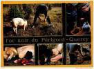 L ' Or Noir Du Périgord Quercy ( Champignons Funghi Cepes, Cochon Et Chien Qui Cherche La Truffe, Marché ) - Elevage