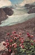 CPA - Illustration - Fleurs De Montagne Ranunculus Glacialis ... - Autres