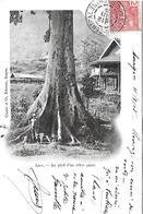 LAOS -  1905 -  AU PIED D UN ARBRE GEANT - Laos