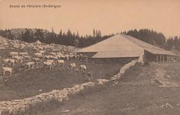 Suisse : SAINT-CERGUE : Chalet De L'arzière ( Avec Vaches ) - VD Vaud