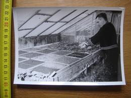 PHOTO 2 STAINACRE Reportage Serre Pepinieriste Fleurs Plantes PONTARLIER Doubs 25 - Mestieri