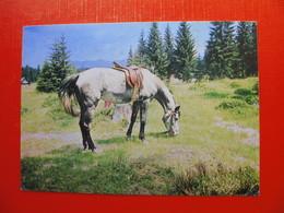 Fotolik Celje - Pferde