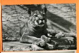 SPR058, Puma, Zoo, Zoologischer Garten Zürich, 9434, édit. Wehrli, Non Circulée - Animaux & Faune