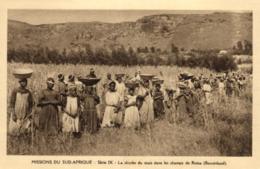 Afrique - Missions Du Sud-Afrique - La Récolte Du Maïs Dans Les Champs De Roma (Basutoland) - C 5652 - Afrique Du Sud