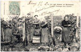 21 LA VIE AUX CHAMPS EN BOURGOGNE - Les Vendanges Dans L'AUXOIS - Autres Communes